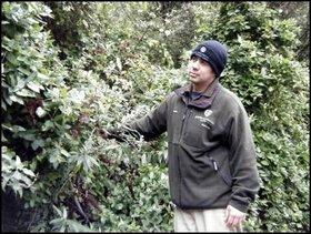 New Zealand Biosecurity Institute vice president, Pedro Jensen examines Buddliea