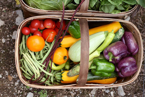 Basket of fresh veggies