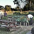 Motueka Community Gardens