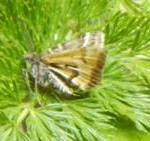 The Avatar Moth