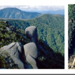 Image collage of the Denniston Plateau