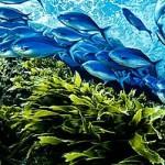 NZ Ocean