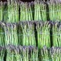 Rows of Asparagus