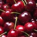 Cherries at Ohoka Farmers' Market